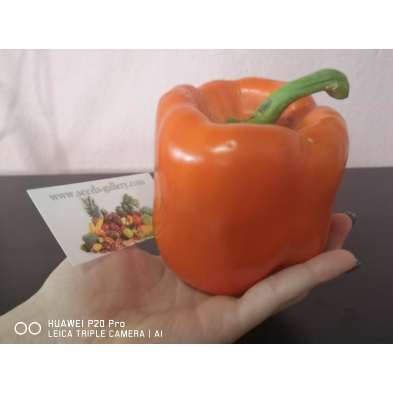 Semi Di Peperone Dolce Arancione - Orange Sun