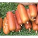 Sementes de Melão Croá ou Caboclo-Cassabanana (Sicana odorifera)