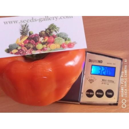 Semillas De Pimienta Dulce Naranja Orange Sun