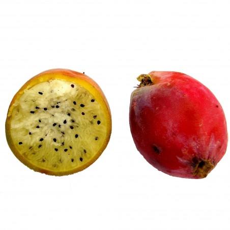 Caracore Cactus Seeds (Cereus dayamii) 1.85 - 5