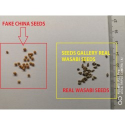 Wasabi Frön - Japansk pepparrot (Wasabia japonica) 5.5 - 3