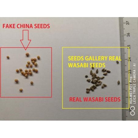 Semillas de Wasabi (Wasabia japonica) 5.5 - 3