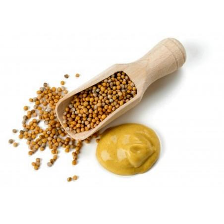 Gelbe Senfgewürze - ungemahlen