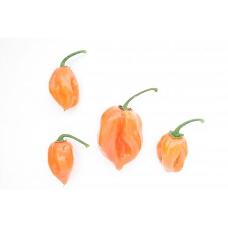 Sementes Pimenta Habanero Peach 2 - 1