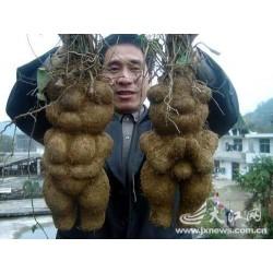 Fo-ti, He-shou-wu Seeds (Polygonum multiflorum) 4.95 - 4