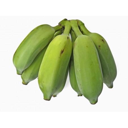 Wilde Bananensamen (Musa balbisiana) 2.25 - 10