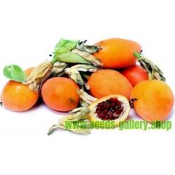 Passionsblomssläktet Frö (Passiflora caerulea)