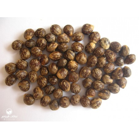 Toothbrush Tree, Mustard Tree Seeds (Salvadora persica) 2.25 - 2