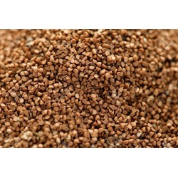 Burflower-Tree, Laran Seeds (Neolamarckia cadamba) 2.35 - 2