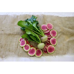Rädisa vattenmelon frön 1.95 - 4