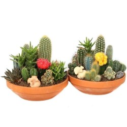 Kaktus Frön Mixa 15 Olika...