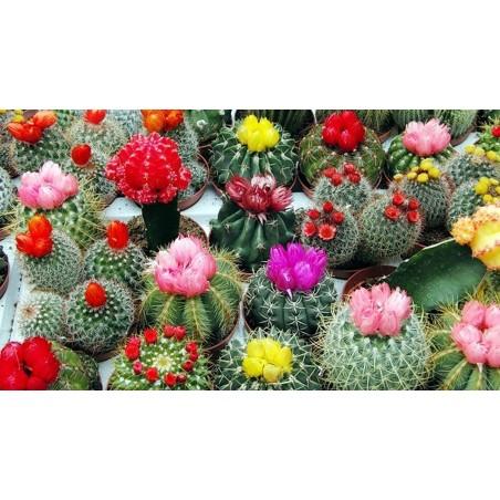 Κάκτος mix σπόροι 15 διάφορα είδη 2.25 - 1