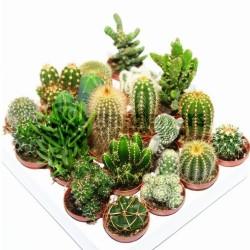 Semillas De Cactus Mix 15 Especies Diferentes 2.25 - 2