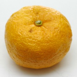 Yuzu Seeds Japanese citrus fruit -20°C (Citrus junos) 4.15 - 3