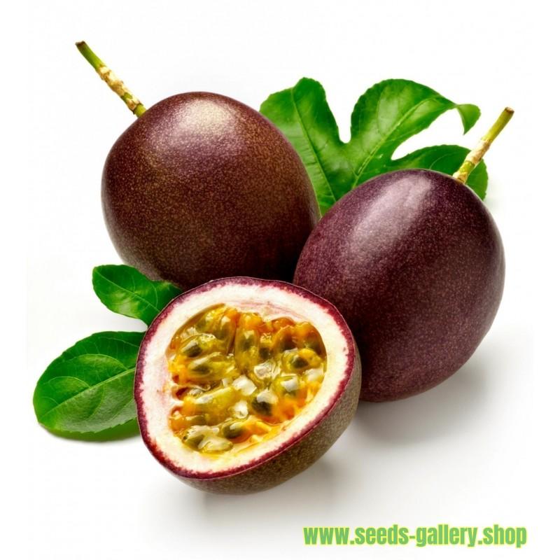 Passiflora Edulis Passion Flower-Passion Fruit Seeds