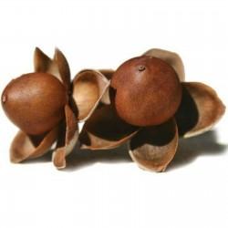 Роза гавайская, Аргирея жилистая семена 1.95 - 1