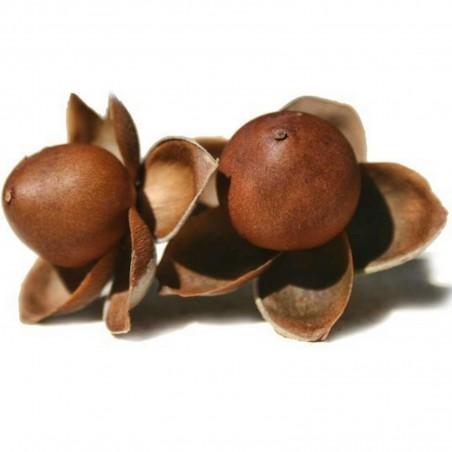 Hawaiianische Holzrose Samen (Argyreia nervosa) 1.95 - 1