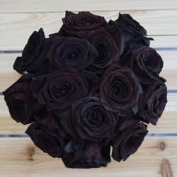 Black Rose Seeds Rare 2.5 - 3