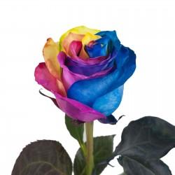 Semillas Color De Rosa Del Arco Iris Rainbow 2.5 - 1