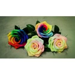 Semillas Color De Rosa Del Arco Iris Rainbow 2.5 - 3