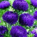 Watercress Seed - Medicinal plant