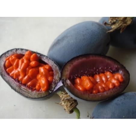 Blue Sweet Calabash Seeds (Passiflora morifolia) 1.7 - 13