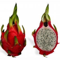 Σπόροι pitaya εξωτικό φρούτο του δράκου 2.35 - 6