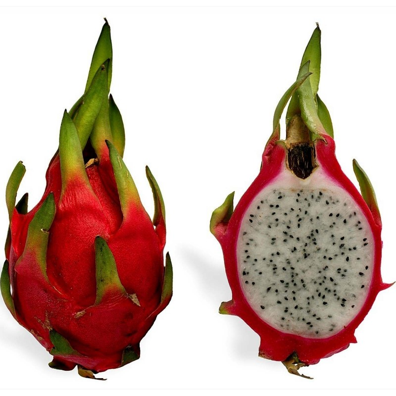 Sementes de Pitaya Fruta Do Dragao Exotica Exclusiva 2.35 - 6