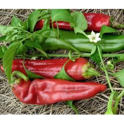 Sementes de pimenta Big Jim Numex 1.75 - 3