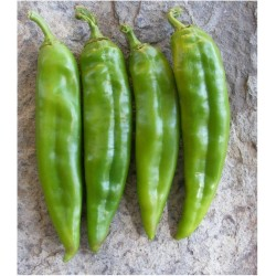 Σπόροι πιπεριά Numex Big Jim 1.75 - 4