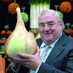 The Kelsae Giant Onion Seeds 2 - 6