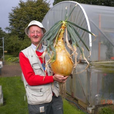 Riesenzwiebel Samen The Kelsae bis 4kg 2 - 5