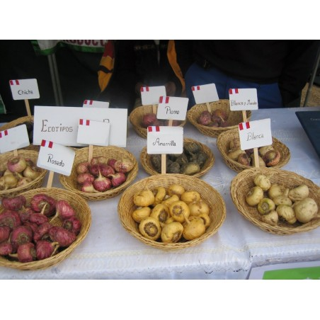 Graines de Maca (Lepidium meyenii) 2.2 - 6