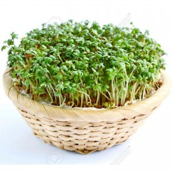 Krecava Salata Seme 1.45 - 2