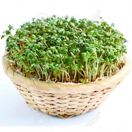 Graines de Cresson (Lepidium sativum) 1.45 - 2
