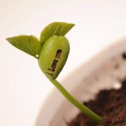 Волшебное Растущее Сообщение Бобы Семена 1.55 - 3