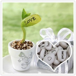 Magic Growing Message Beans Seeds 1.55 - 5