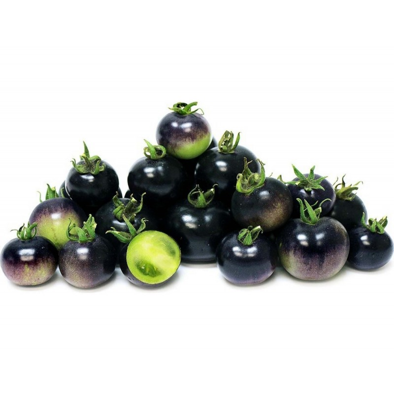 "Blue Tomato Seeds ""Bosque Blue"" 2.5 - 1"