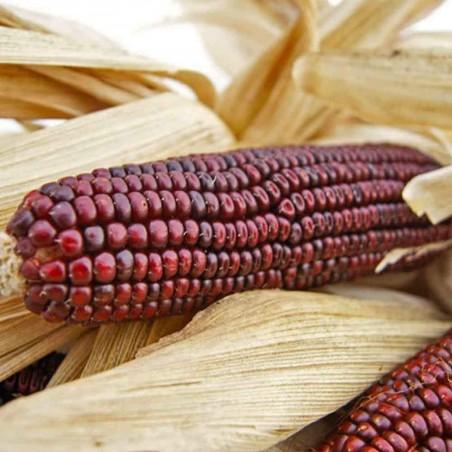 Семена красной Кукурузы Кровавый Мясник 1.95 - 2