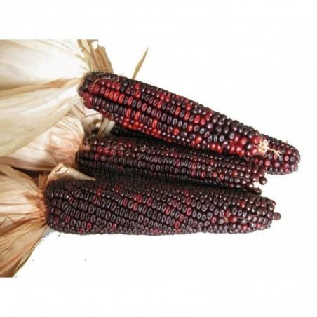 Семена красной Кукурузы Кровавый Мясник 1.95 - 3