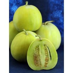 """Japanese Heirloom Melon Seeds """"Sakata's Sweet"""" 2.35 - 3"""