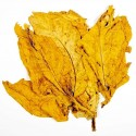 Tabacco L'Avana Oro lisci - Hav. Gold Smooth 1000 Semi