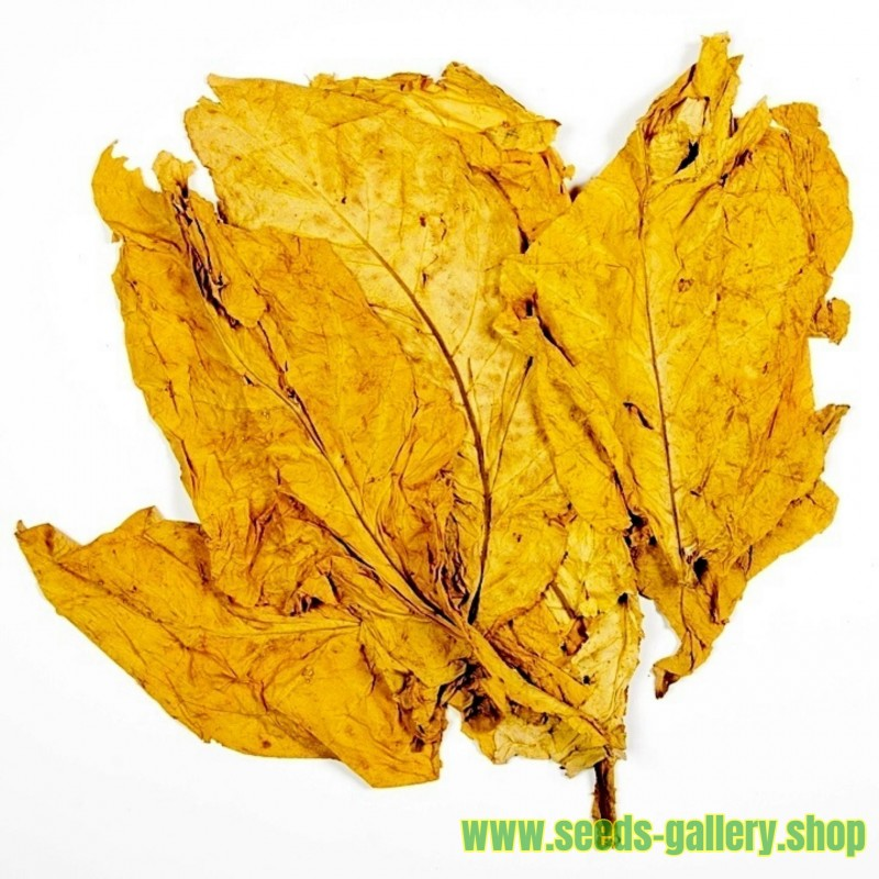 Hav. Gold Tobacco 1000 Seeds