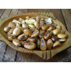 Riesen Röstmais - Mais der Anden CHULLPI Samen 2.45 - 4