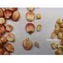 Graines de Haricot Azuki (Vigna angularis)