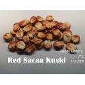 Rispenhirse Samen oder Echte Hirse (Panicum miliaceum)