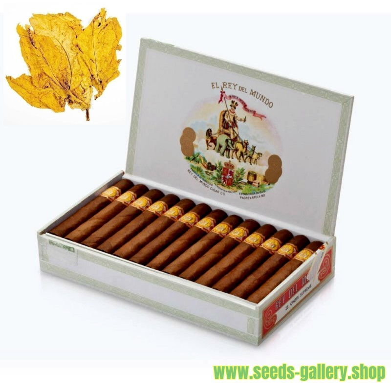 Tabaco Hav. Gold Smooth 1000 Semillas