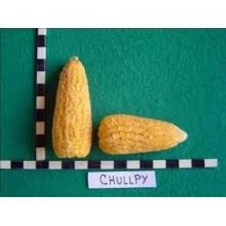 Semi di mais peruviano Chulpe - Cancha Giallo 2.25 - 2