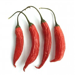 Sementes de pimentão de Aji Chicotillo Rojo (Capsicum pendulum) 2.15 - 1