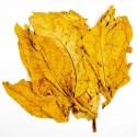 Sementes de Tabaco Hav. Gold (Ouro)